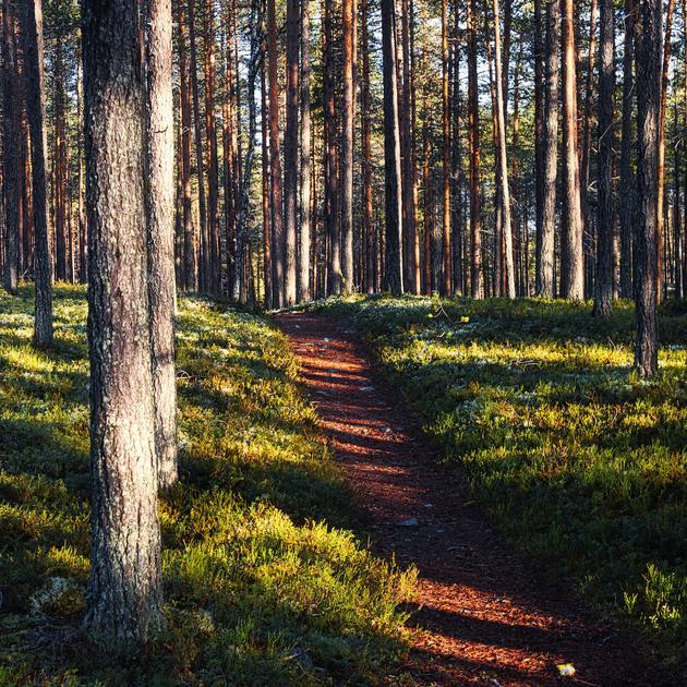 Herbstlicher Waldwanderweg